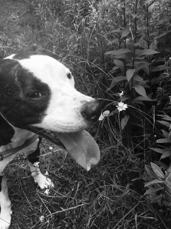Grady with daisy 2016