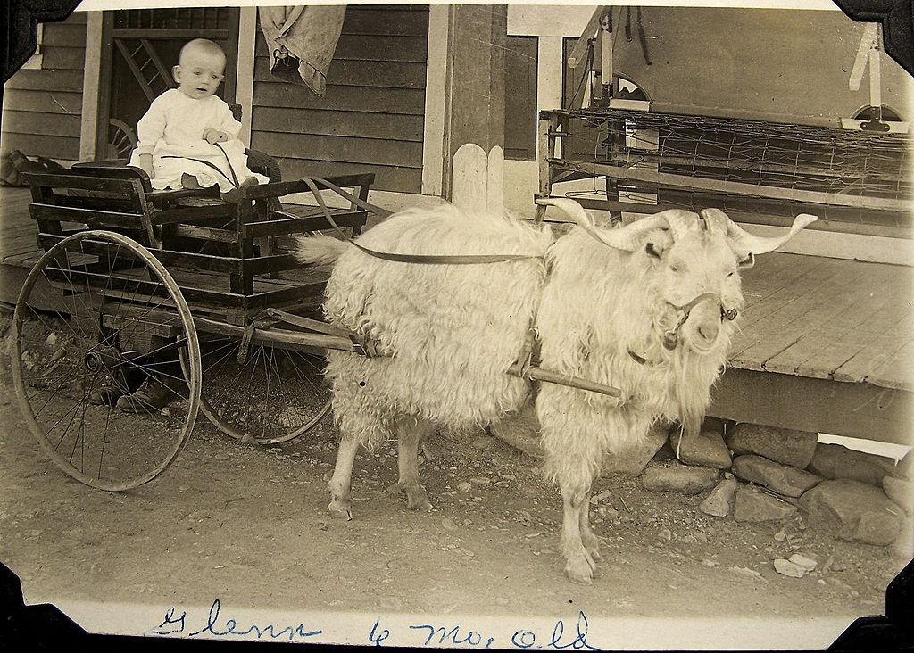 Grandpa Glenn just chillin' on his goat cart. Photo taken around 1916. Globe, Arizona.