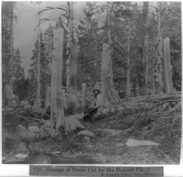 """""""Stumps of trees cut by the Donner Party in Summit Valley, Placer County"""" Grayscaled albumen print, half stereograph. (1866) via the Library of Congress"""